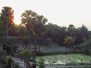 Samta, India - Samta panorama from a house's terrace during sunset