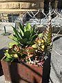 San Jose Cactus Planter 3 2017-03-21.jpg