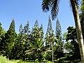 San Juan Botanical Garden - DSC06979.JPG