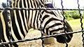 Santafe Zoo (69526517).jpeg