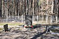 Sarkanās armijas brāļu kapi Lazdu ielā, Salaspils (90 karavīri) WWII, Salaspils novads, Latvia - panoramio (1).jpg