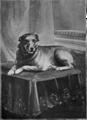 Saunders dog.png