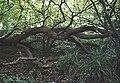 Scarp swamp, Jervis Wood East - geograph.org.uk - 267715.jpg