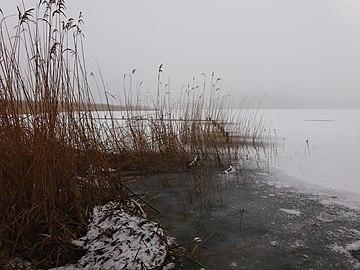 Schilf und Eis am Ufer des Partseinsees.jpg