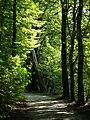 Schlosspark Rastede Waldweg.JPG