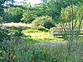 School Aycliffe Wetland - geograph.org.uk - 60982.jpg