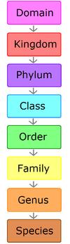 The hierarchy of scientific classification