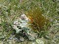 Sea Anemone (5295758064).jpg