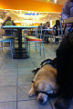 Service Dog at food court.jpg