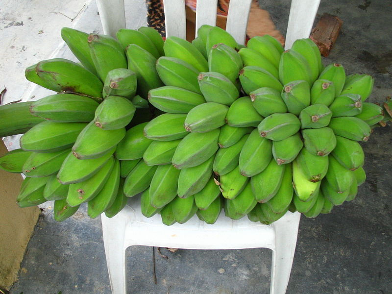 50+ Contoh Tumbuhan Monokotil Beserta Nama Latinnya [Lengkap]