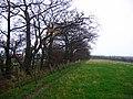 Shelterbelt, Quarter. - geograph.org.uk - 75660.jpg