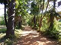 Side road to Banteay Srei - panoramio.jpg