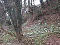 Snowdrops at the edge of the floodplain on the site of the old mill at Dotton - geograph.org.uk - 1164088.jpg