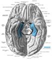 Sobo 1909 630 - Parahippocampal gyrus.png