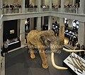 Sonderausstellung Elefantenreich, Landesmuseum für Vorgeschichte Sachsen-Anhalt.jpg