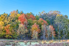 Southeastern corner of Toumey Woods, fall 2015.JPG
