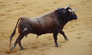 Spanish Fighting Bull - A Spanish Fighting Bull. Breed: Vegahermosa. Feria de Córdoba 2009