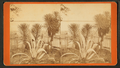 Spanish bayonet and century plant in a fenced garden, by Ryan, D. J., 1837-.png