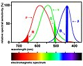 Spectral sensitivity of human photoreceptors and best RGB colors.jpg
