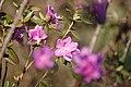 Spring Flowers (33116789).jpeg