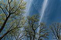 Spring Trees in Cannon Falls, Minnesota - Two Rivers Park (42014930472).jpg