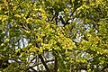 Spring in Epsom (6979984688).jpg