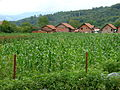 Srebrenica Massacre - Countryside around Potocari - 2.jpg