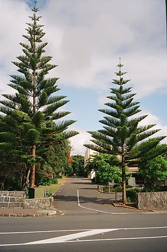 St Peter's College, Auckland - St Peter's College Entrance (former site of Reeves Rd), 2009
