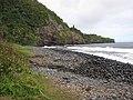 Starr-120606-7093-Thespesia populnea-habit view coast-Backside Lelekea Bay-Maui (25051525911).jpg