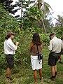 Starr 080613-8779 Solanum torvum.jpg
