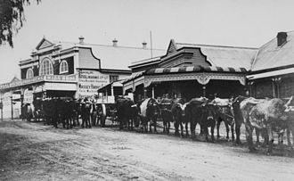 Scenic Rim Region - A bullock team at Kalbar, 1915