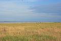 Steppe in Blagoveshensky District 04.JPG