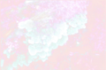 Stereum fasciatum fungus.tif
