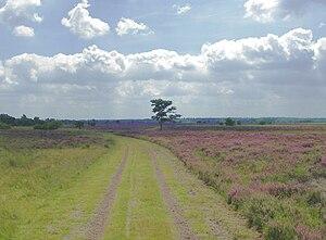 Strabrechtse Heide - The Strabrechtse Heide