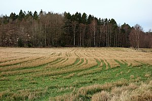 Crop residue - Stubble field in Brastad, Sweden