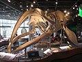 Stumpy right whale NC.jpg