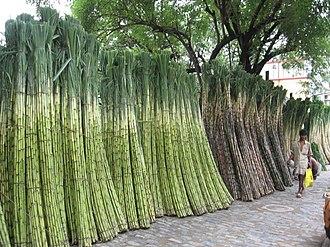 Jorasanko - Image: Sugar Cane