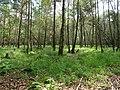 Swamp next to the Teufelsbruch swamp in autumn.jpg