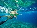 Swim with Turtle.jpg