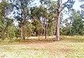 Sydney grassy woodland.jpg