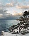 Tall och hav vid Sigsarve strand Gotland.jpg