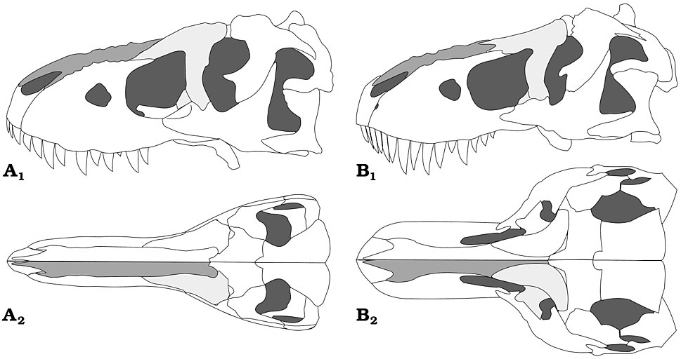 Tarbosaurus and Tyrannosaurus