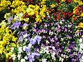 Teignmouth Blooms Again - 10 - Flickr - Sir Hectimere.jpg