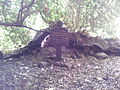 Tel dan old tree.jpg