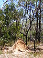 Termite mound belair national park.jpg