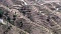 Terrace farming Uttarakhand.jpg