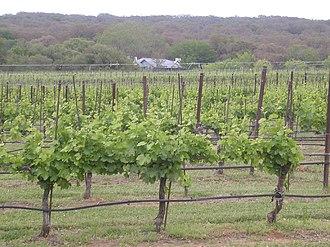 Texas wine - A vineyard in the Texas Hill Country AVA near Johnson City.
