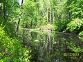 The Lawrence Brook, Monmouth Junction, New Jersey USA May 2013 - panoramio (8).jpg