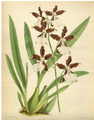 The Orchid Album-01-0140-0046.png