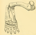 The Osteology of the Reptiles-198 fgh ghj gyhuj.png